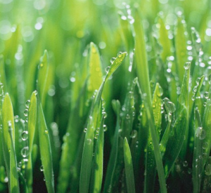 Five Things You Can Do Now For a Greener Lawn Next Year